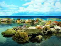 大堡礁Great Barrier Reef